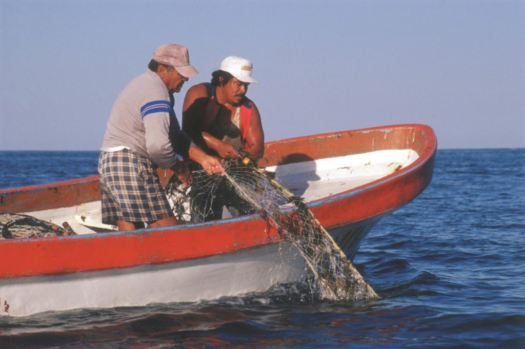 pesca-bc-sustentabilidad