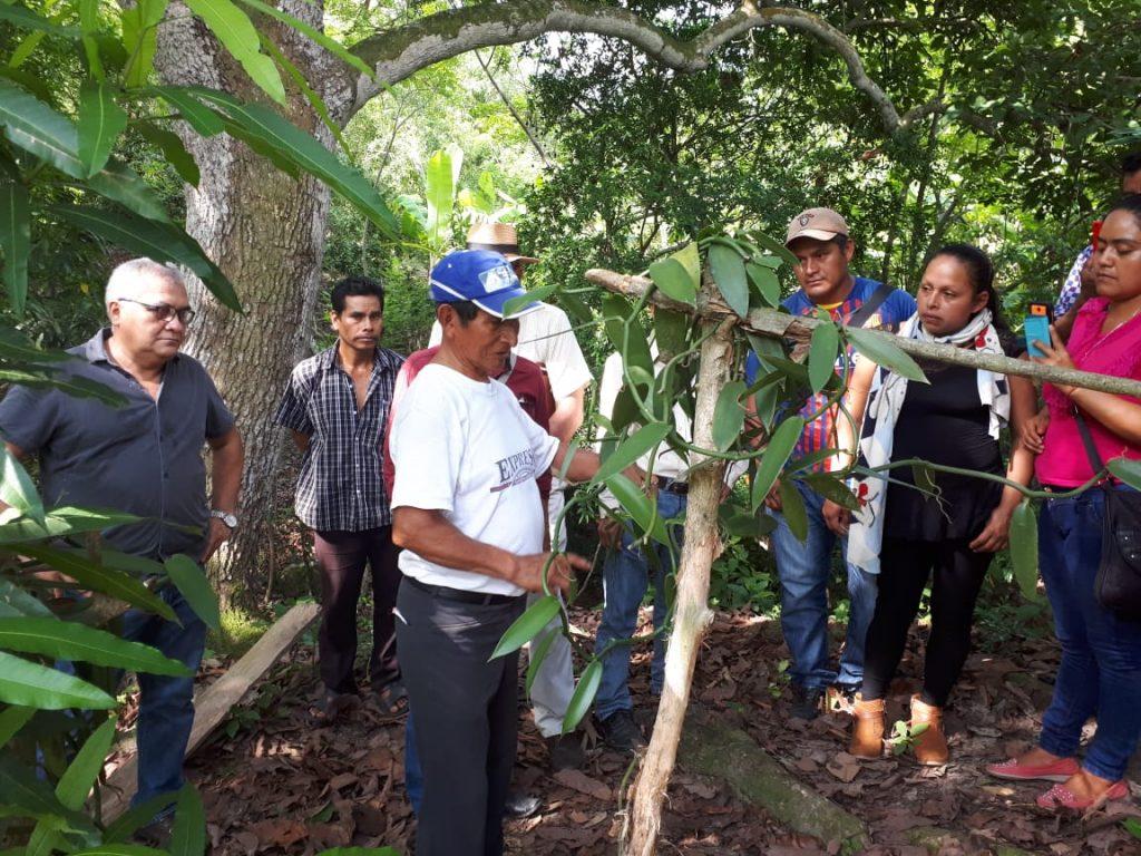 orquidea-mexicana-pedro-y-elena-hernández-mexico-chiapas-sustentur
